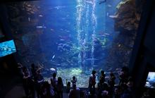 2012年3月にオープンしたばかりの京都水族館に行ってきました!