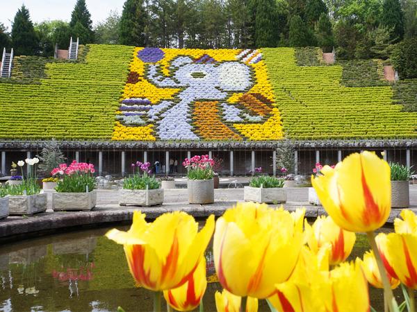 お弁当を持って「宇治市植物公園」に出かけよう!日本一を誇る立体花壇「花と水のタペストリー」が巨大すぎる。。