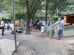 以前ニュースで話題になった、福知山動物園のニホンザル「みわちゃん」とウリボウ(猪の子供)