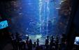京都水族館のイルカショーのパフォーマンスは必見!