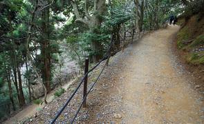 お手軽登山も味わえる、嵐山モンキーパークいわたやまの野生のお猿の楽園を見てみよう。