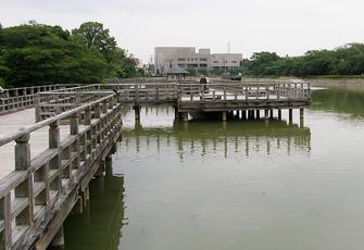 学問の神様「長岡天満宮」の八条ヶ池に架かる水上橋が気持ちいい。